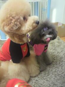 愛犬鈴ちゃん~トイプードル☆ライフスタイル~-2011121614220001.jpg