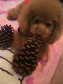 愛犬鈴ちゃん~トイプードル☆ライフスタイル~-2011121620320001.jpg