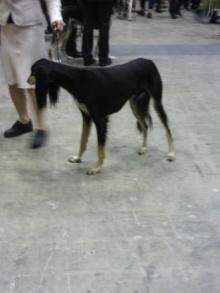 愛犬鈴ちゃん~トイプードル☆ライフスタイル~-2011121812150001.jpg