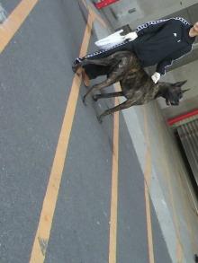 愛犬鈴ちゃん~トイプードル☆ライフスタイル~-2011121812240001.jpg