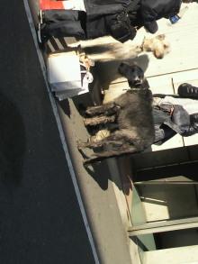 愛犬鈴ちゃん~トイプードル☆ライフスタイル~-2011121812240000.jpg