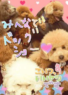 愛犬鈴ちゃん~トイプードル☆ライフスタイル~-image0004.jpg