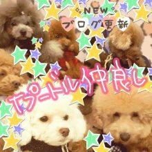 愛犬鈴ちゃん~トイプードル☆ライフスタイル~-image0003.jpg