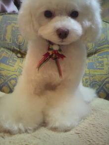 愛犬鈴ちゃん~トイプードル☆ライフスタイル~-2011122020460002.jpg