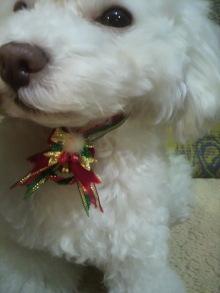 愛犬鈴ちゃん~トイプードル☆ライフスタイル~-2011122116580003.jpg