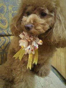 愛犬鈴ちゃん~トイプードル☆ライフスタイル~-2011122117060000.jpg