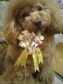 愛犬鈴ちゃん~トイプードル☆ライフスタイル~-2011122117060002.jpg