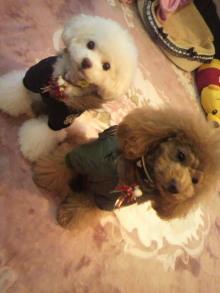 愛犬鈴ちゃん~トイプードル☆ライフスタイル~-2011122116030000.jpg