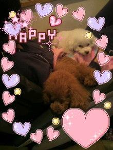 愛犬鈴ちゃん~トイプードル☆ライフスタイル~-2011122221200000.jpg