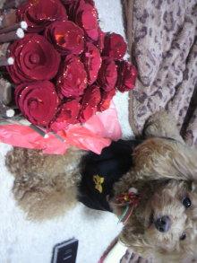 愛犬鈴ちゃん~トイプードル☆ライフスタイル~-2011122416220001.jpg