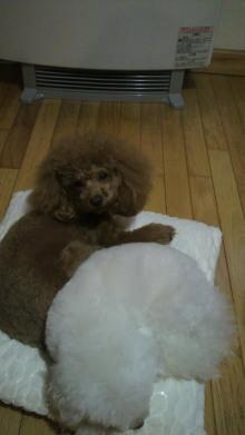 愛犬鈴ちゃん~トイプードル☆ライフスタイル~-2011123006590000.jpg