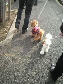 愛犬鈴ちゃん~トイプードル☆ライフスタイル~-2012010212430000.jpg
