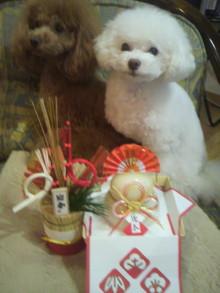 愛犬鈴ちゃん~トイプードル☆ライフスタイル~-2011123016220000.jpg