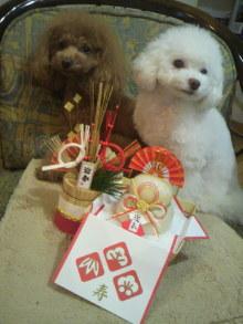 愛犬鈴ちゃん~トイプードル☆ライフスタイル~-2011123016230000.jpg