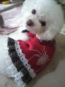 愛犬鈴ちゃん~トイプードル☆ライフスタイル~-2011123110020000.jpg