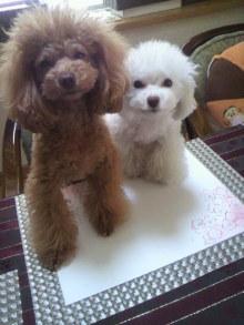 愛犬鈴ちゃん~トイプードル☆ライフスタイル~-2012010109260000.jpg