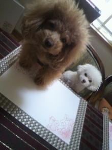 愛犬鈴ちゃん~トイプードル☆ライフスタイル~-2012010109250000.jpg