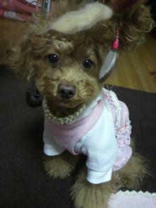 愛犬鈴ちゃん~トイプードル☆ライフスタイル~-2012010818070000.jpg