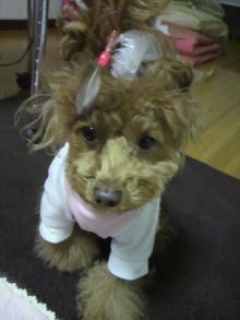 愛犬鈴ちゃん~トイプードル☆ライフスタイル~-2012010818080000.jpg