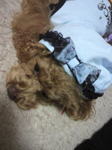 愛犬鈴ちゃん~トイプードル☆ライフスタイル~-2012011115100001.jpg