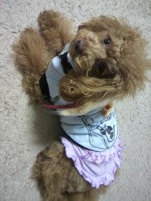 愛犬鈴ちゃん~トイプードル☆ライフスタイル~-2012011115100002.jpg