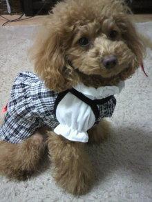愛犬鈴ちゃん~トイプードル☆ライフスタイル~-2012011115130001.jpg