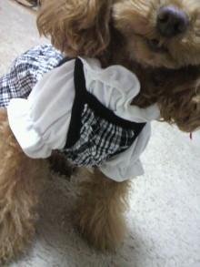 愛犬鈴ちゃん~トイプードル☆ライフスタイル~-2012011115110001.jpg