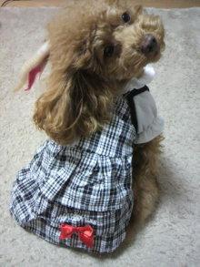 愛犬鈴ちゃん~トイプードル☆ライフスタイル~-2012011115120000.jpg