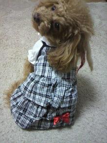 愛犬鈴ちゃん~トイプードル☆ライフスタイル~-2012011115120001.jpg