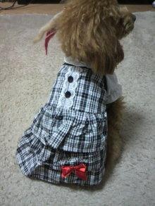 愛犬鈴ちゃん~トイプードル☆ライフスタイル~-2012011115120002.jpg