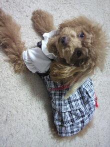 愛犬鈴ちゃん~トイプードル☆ライフスタイル~-2012011115130000.jpg