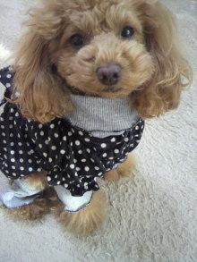 愛犬鈴ちゃん~トイプードル☆ライフスタイル~-2012011314560001.jpg