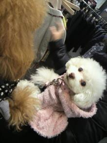愛犬鈴ちゃん~トイプードル☆ライフスタイル~-2012011510560000.jpg