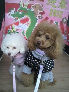 愛犬鈴ちゃん~トイプードル☆ライフスタイル~-2012011511020000.jpg