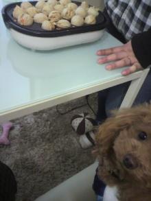 愛犬鈴ちゃん~トイプードル☆ライフスタイル~-2012011614320000.jpg