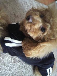 愛犬鈴ちゃん~トイプードル☆ライフスタイル~-2012011813150001.jpg