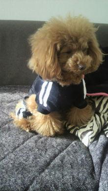愛犬鈴ちゃん~トイプードル☆ライフスタイル~-2012011814130000.jpg