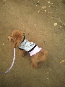 愛犬鈴ちゃん~トイプードル☆ライフスタイル~-2012011912430000.jpg
