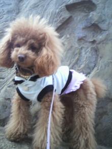愛犬鈴ちゃん~トイプードル☆ライフスタイル~-2012011912440001.jpg