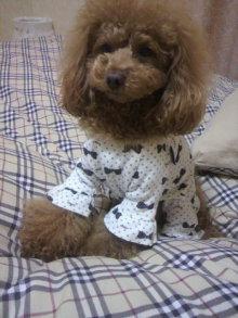 愛犬鈴ちゃん~トイプードル☆ライフスタイル~-2012011922090000.jpg