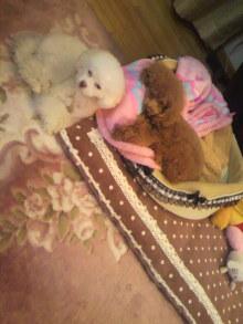 愛犬鈴ちゃん~トイプードル☆ライフスタイル~-2012012601310000.jpg