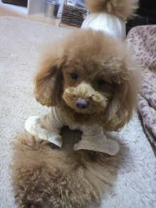 愛犬鈴ちゃん~トイプードル☆ライフスタイル~-2012012719580000.jpg