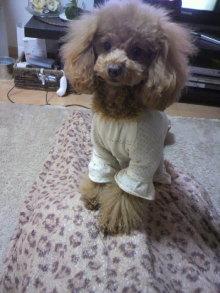 愛犬鈴ちゃん~トイプードル☆ライフスタイル~-2012012719570000.jpg