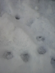 愛犬鈴ちゃん~トイプードル☆ライフスタイル~-2012012816190001.jpg