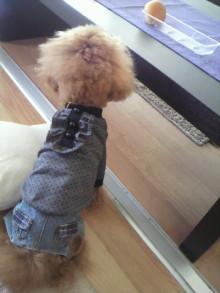 愛犬鈴ちゃん~トイプードル☆ライフスタイル~-2012012911200000.jpg