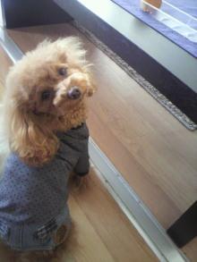 愛犬鈴ちゃん~トイプードル☆ライフスタイル~-2012012911200001.jpg