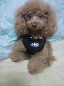 愛犬鈴ちゃん~トイプードル☆ライフスタイル~-2012012923000000.jpg