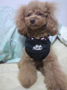 愛犬鈴ちゃん~トイプードル☆ライフスタイル~-2012012923040000.jpg