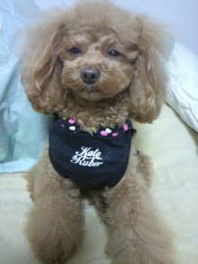 愛犬鈴ちゃん~トイプードル☆ライフスタイル~-2012012923040002.jpg