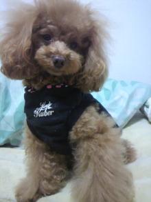 愛犬鈴ちゃん~トイプードル☆ライフスタイル~-2012012923050000.jpg